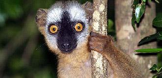 Madagáscar Exuberante