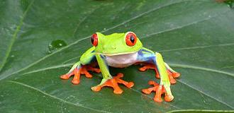 Costa Rica verde e azul
